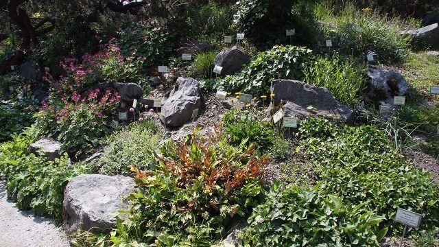 Ботанический сад с рокарием