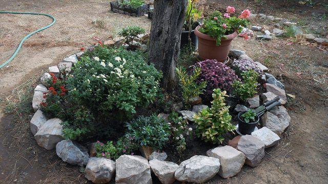 Каменный сад в оформлении клумбы под деревом