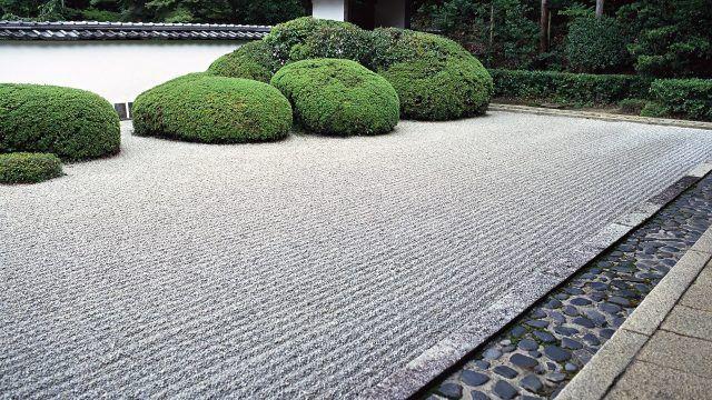 Лаконичный кустарник в декоре сада камней