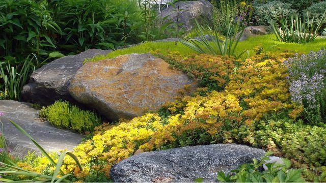 Мох на камнях рокария и жёлтые цветы
