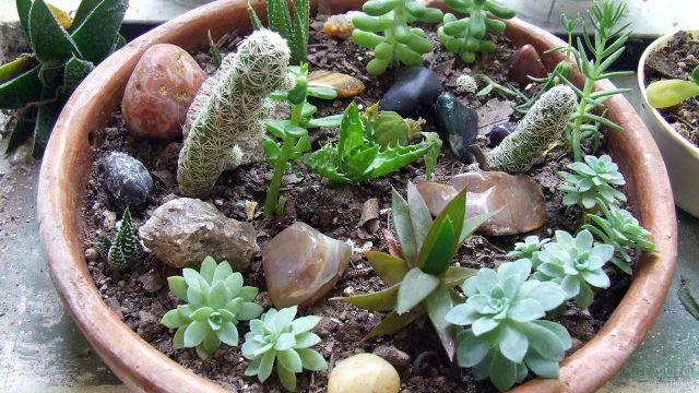 Рокарий с кактусами на подоконнике