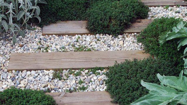 Сухой пейзаж рокария с зеленью и древесиной