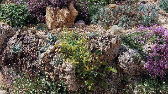 Живые цветы в каменном саду
