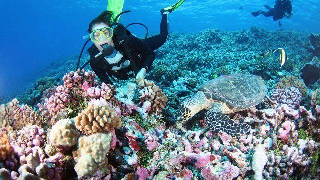 Девушка дайвер возле кораллового рифа с морской черепахой