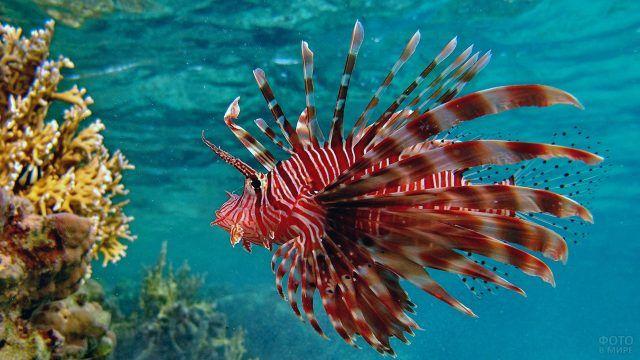 Экзотическая рыбка в водах Бора-Бора