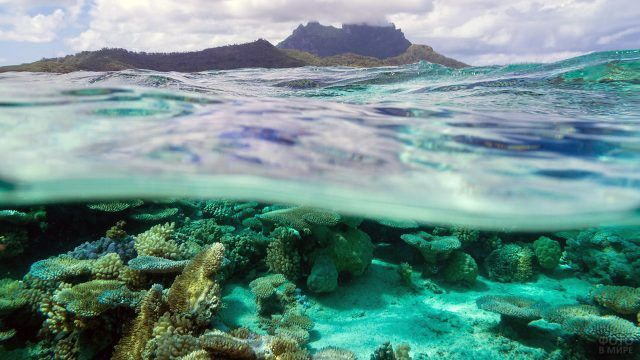 Волны океана и кораллы на дне