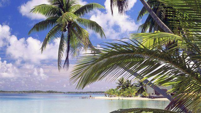 Зелень пальм на Бора-Бора