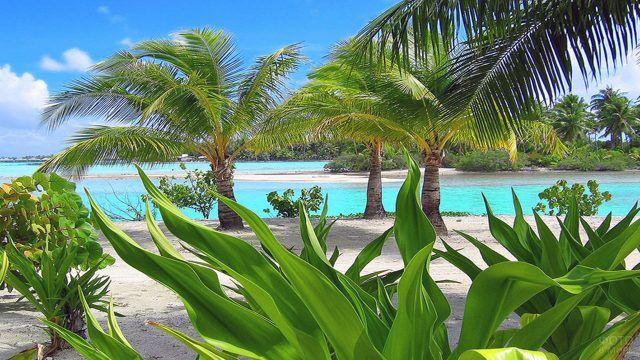 Зелень тропиков у пляжа на Бора-Бора