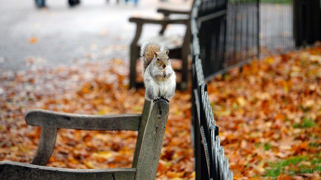 Белка на спинке скамейки в осеннем парке