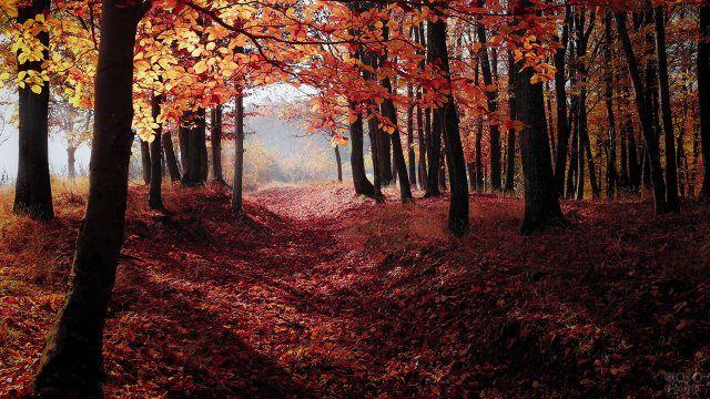 Деревья роняют листья на плотный красный ковёр