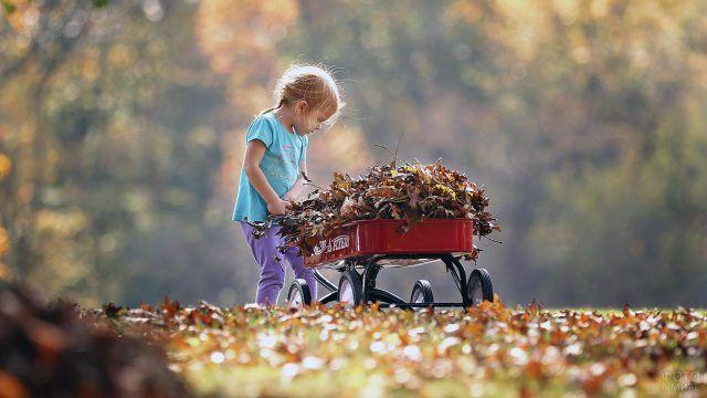 Девочка с садовой тележкой полной опавших листьев