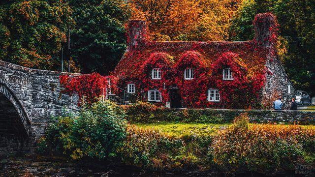 Дом с красными листьями вьюнка на фасаде и крыше в живописном сельском уголке