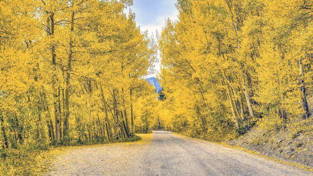 Дорога сквозь жёлтый лес
