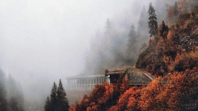 Фантастический вид в осеннем туманном лесу