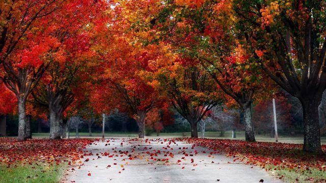 Яркая листва облетает на дорожку и газон в парке