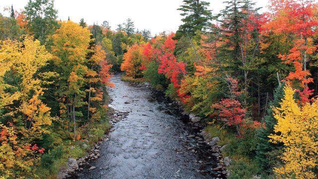 Яркие осенние деревья в хвойном лесу над рекой