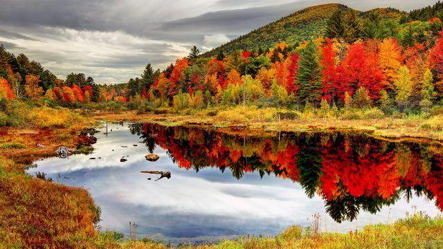 Яркие осенние деревья в хвойном лесу отражаются в горном озере