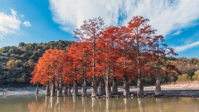 Кипарисы в озере Сукко
