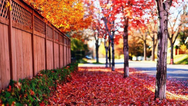 Красная ковровая дорожка из листьев
