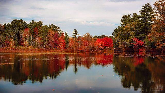 Красные деревья у лесного озера