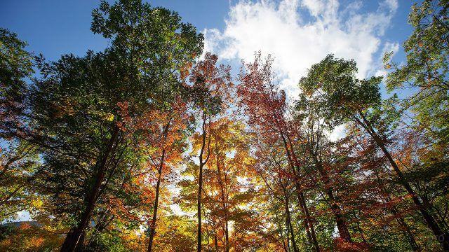 Кроны осенних деревьев над головой