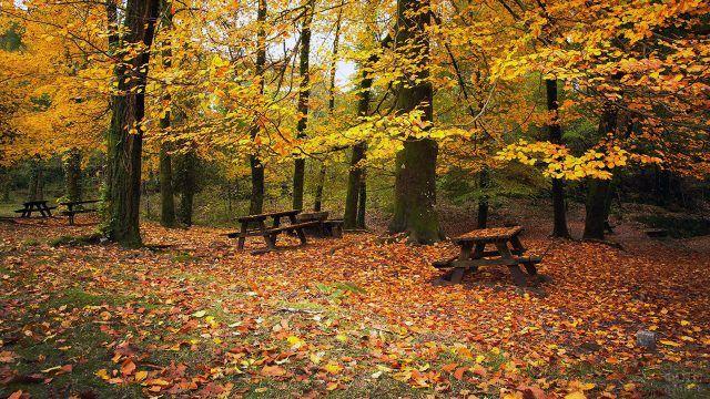 Лавочки со столами под жёлтыми листьями в старом парке