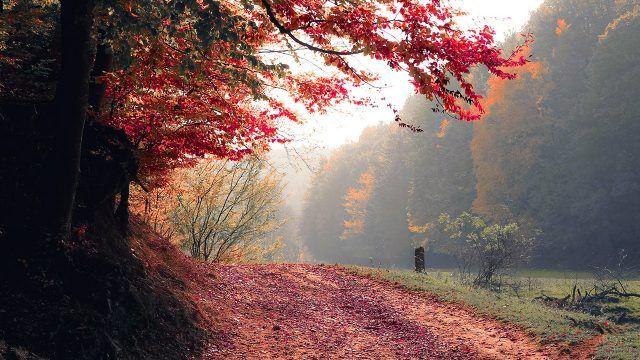 Лесная дорога усыпанная листьями осеннего леса