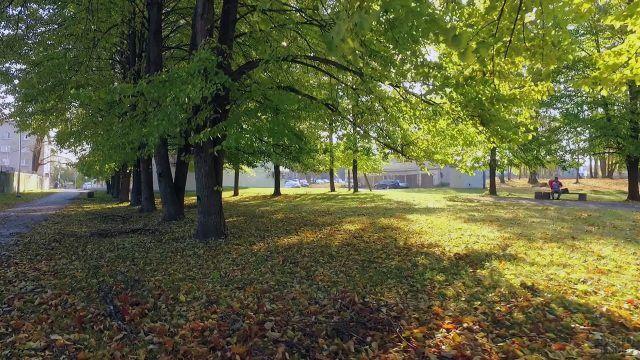 Облетевшая листва в ещё зелёном парке