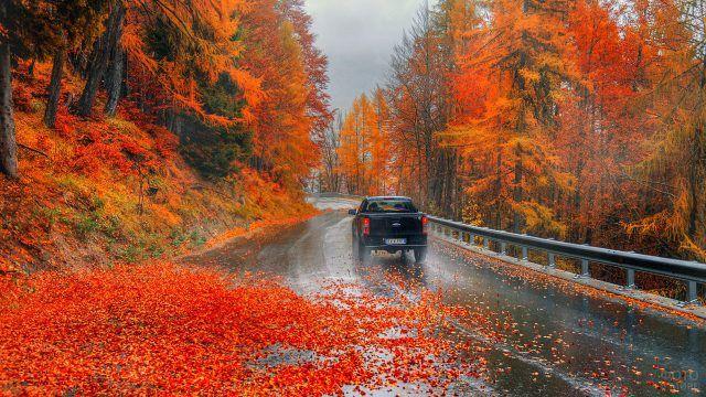 Огненно-оранжевые листья вдоль горной дороги под дождём