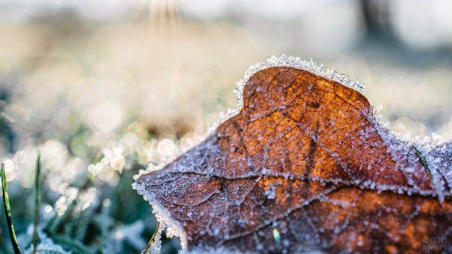 Опавший лист в инее