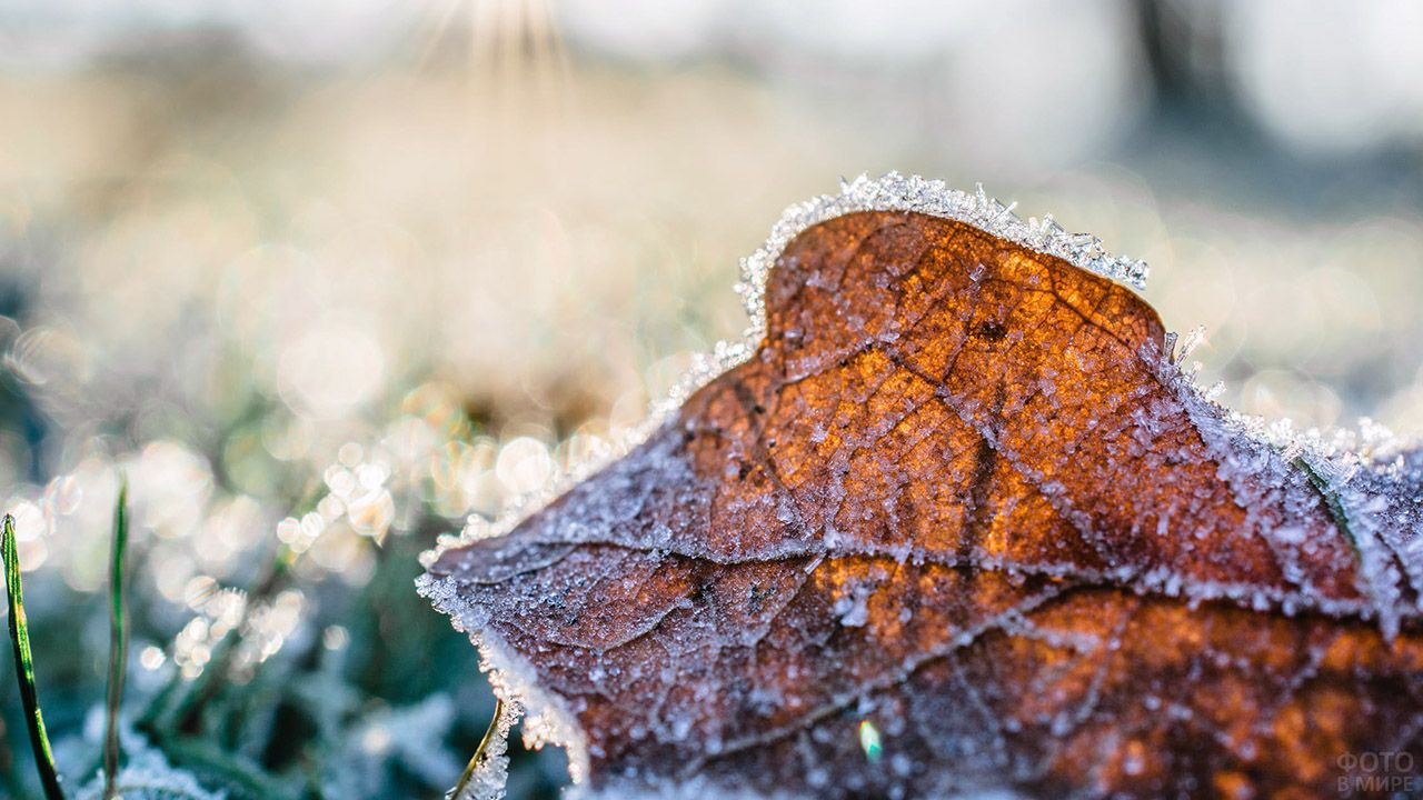 В Курской области прогнозируют дожди и заморозки