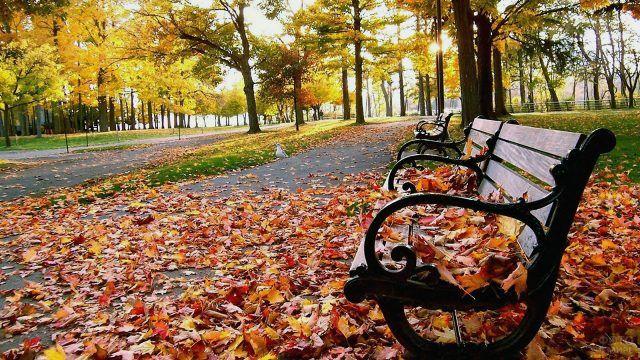 Оранжевая листва на скамейках парка