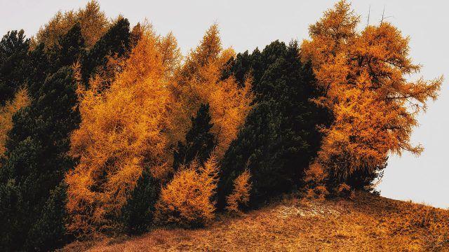 Осенние деревья клонятся под порывом ветра