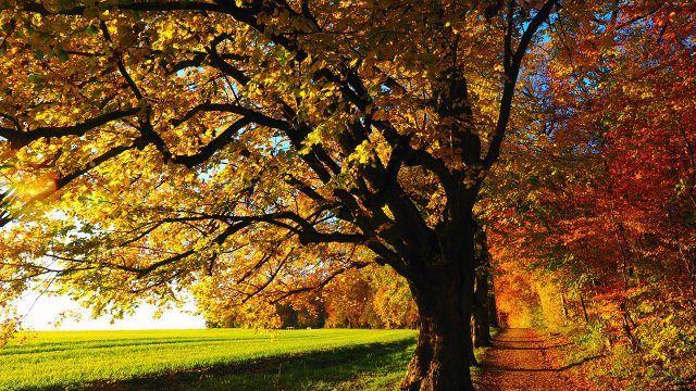 Осенние деревья у зелёного поля
