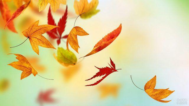 Парящие в воздухе осенние листья