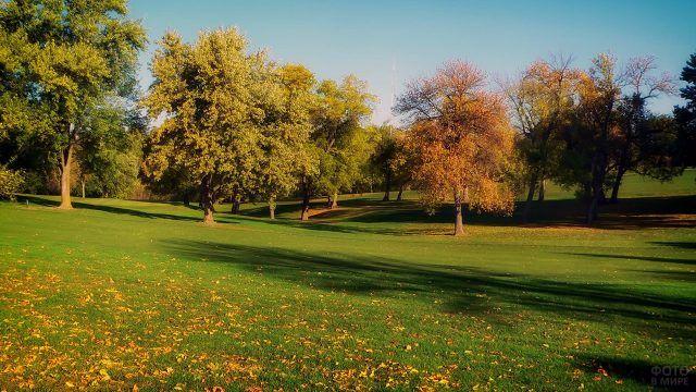 Первые облетевшие листочки на зелёной солнечной лужайке