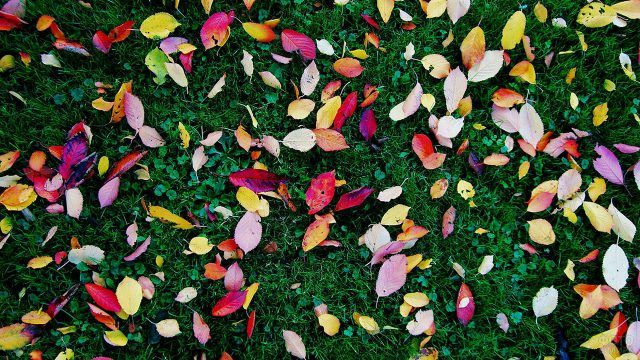 Разноцветные опавшие листья