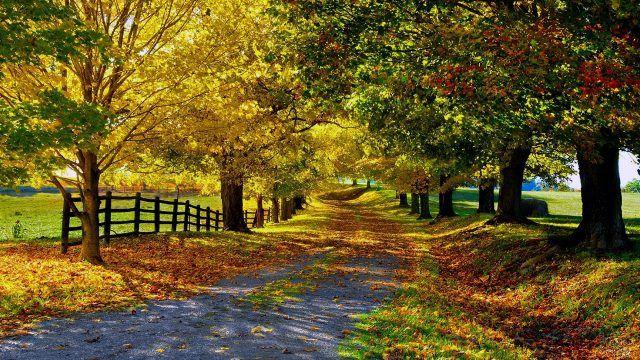 Солнечный свет пробивается сквозь листву осенней аллеи