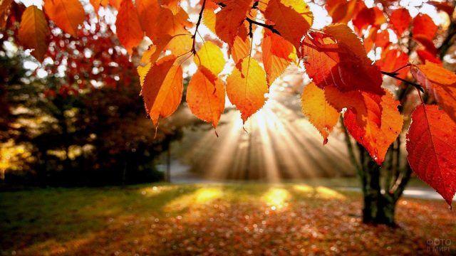 Солнечный свет сквозь оранжевые листья