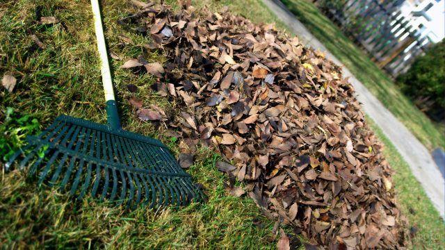 Сухие листья собранные садовыми граблями
