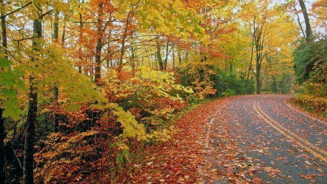 Трасса в осеннем лесу усыпанная яркими листьями