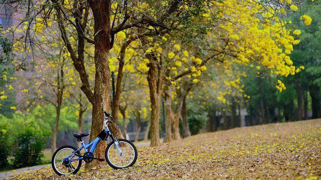 Велосипед под деревом среди опавшей листвы