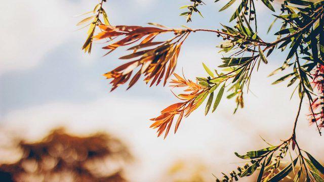 Веточка осеннего дерева на ветру