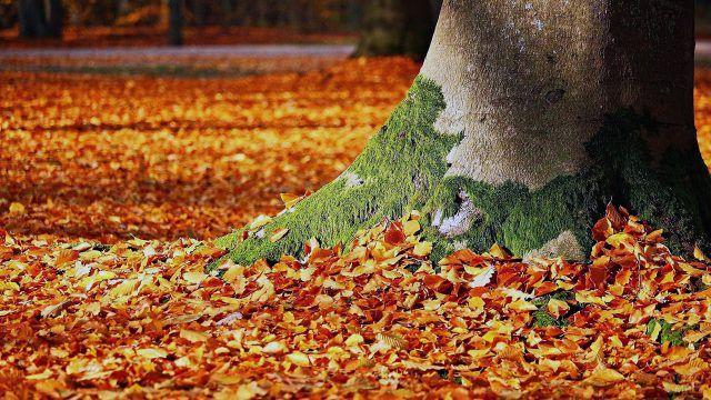 Золотая листва у подножия дерева