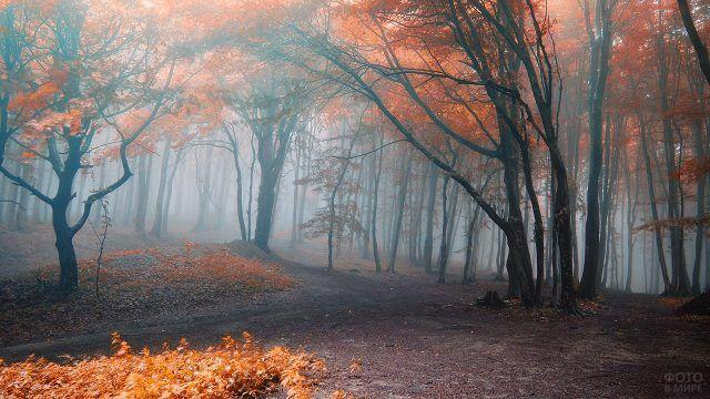 Золотые деревья в туманном лесу