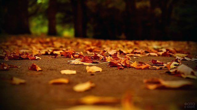 Золотые листья на дорожке парка