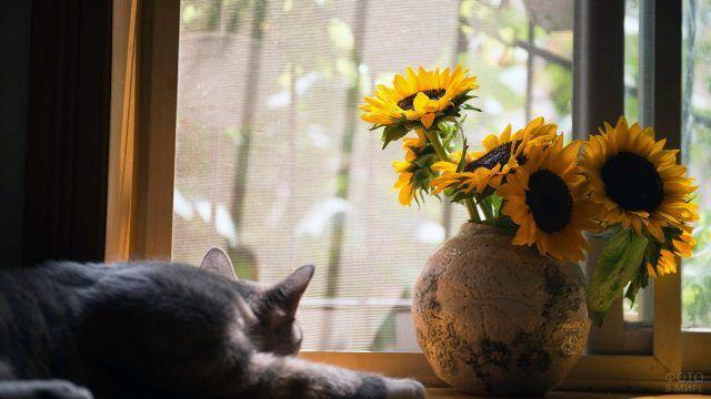 Кот и подсолнухи на подоконнике