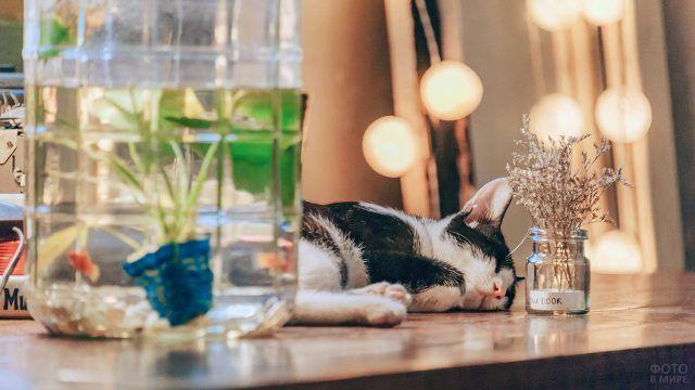 Спящий котёнок рядом с вазочкой с цветами