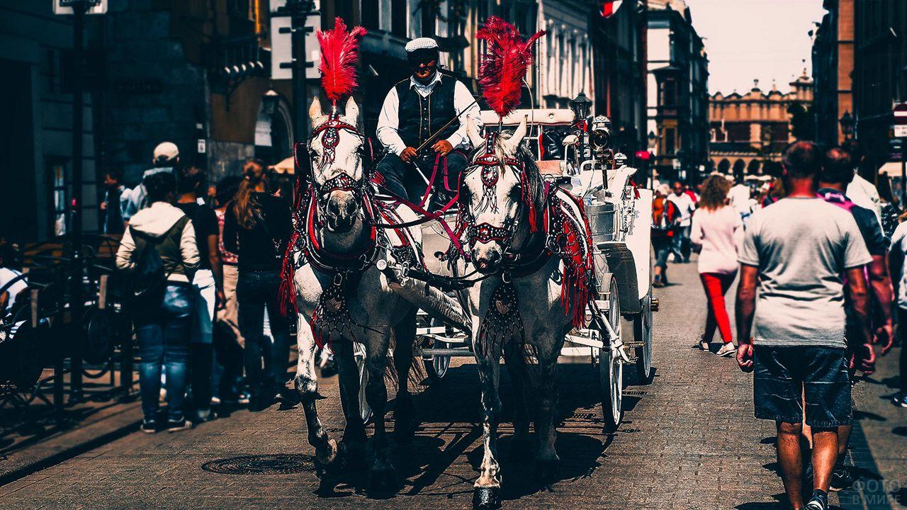 Две белых лошади в красных попонах и с плюмажами запряжены в туристическую карету