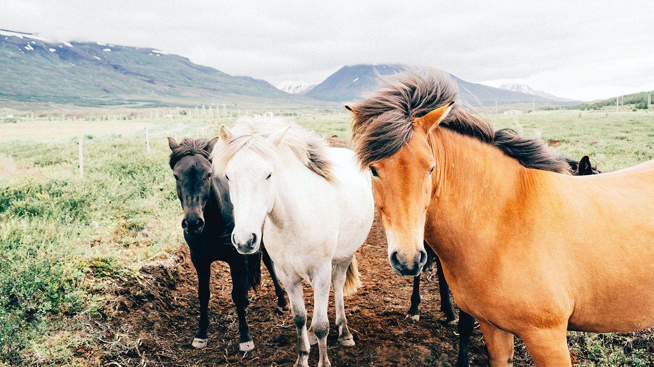 Степные лошади на ферме в предгорье